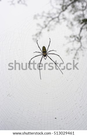 Spiders, spiders in the wild, insects, animals, nature.