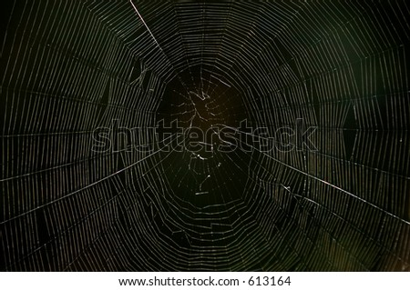 Spiders web in the dark - stock photo