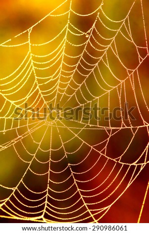 spiders web sunrise