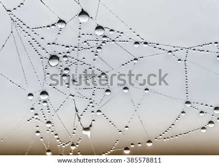 spiderweb and dewdrops