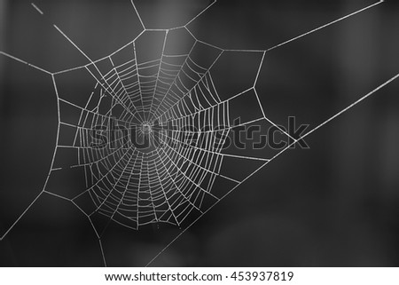Spiderweb covered in dew on a winter morning - stock photo