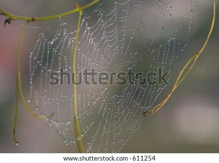 Spiderweb with dew. - stock photo