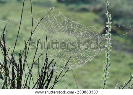 Spiderweb with dew drops hanging on leafless branches - stock photo