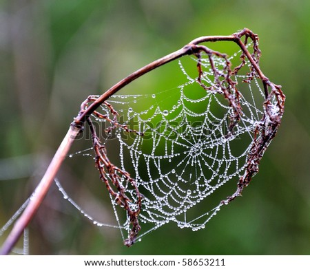spiderweb with dew on green background - stock photo