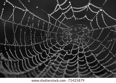 spiderweb with dewdrops - stock photo