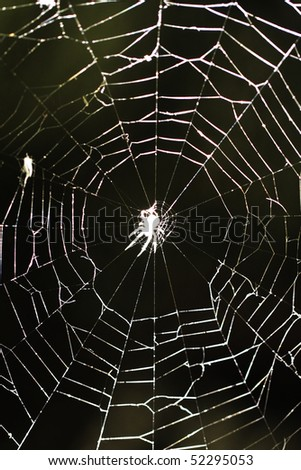 Spiderweb with spider in the center
