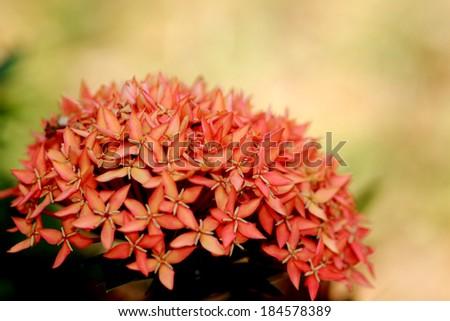 Spike flower - stock photo