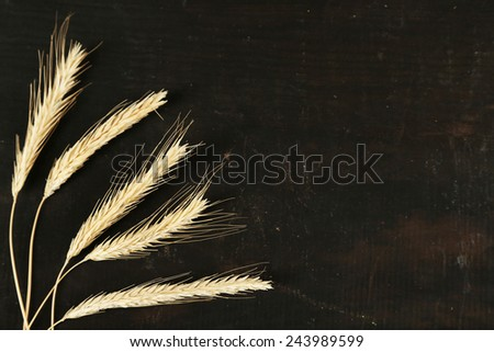 Spikelets of wheat on black wooden background - stock photo
