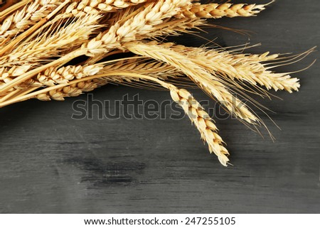 Spikelets of wheat on dark wooden background - stock photo