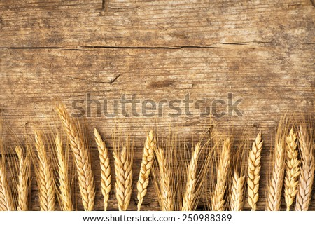 Spikelets of wheat on old wooden table background - stock photo