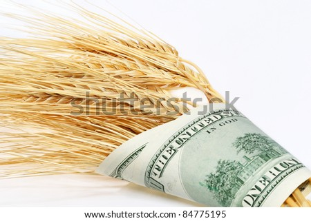 Spikes of wheat wrapped in dollars on a light background - stock photo