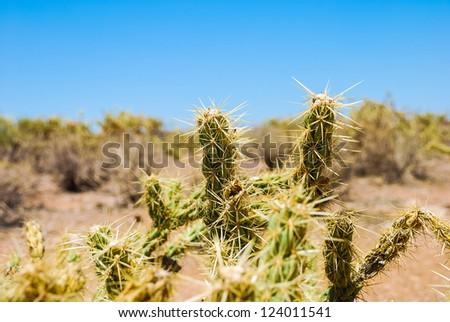 Spikey Desert Cactus - stock photo
