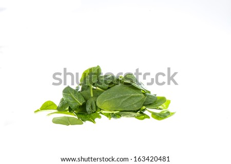 spinach isolated on white background - stock photo