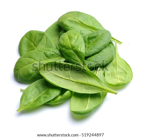 Photosynthesis and Chromatography of Spinach Leaves Essay