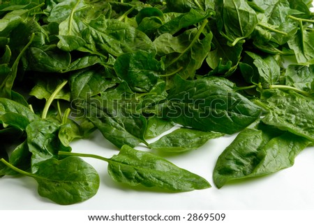 Spinach on a white background - stock photo