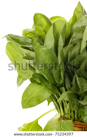 Spinach on white background - stock photo