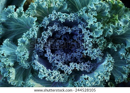 spinach texture - stock photo