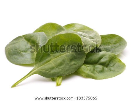 Spinach vegetables  isolated on white background cutout - stock photo