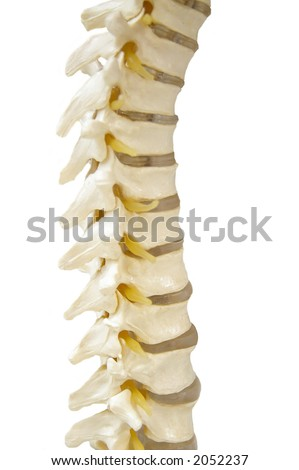 Spinal-column model isolated on white - stock photo