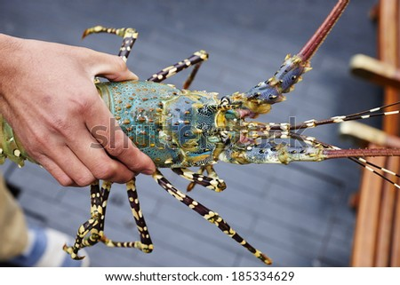 Spiny lobster of Halong Bay, Vietnam - stock photo