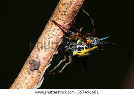 Spiny spider on branch
