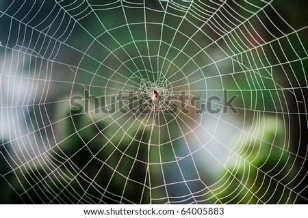 Spiral orb web in focus with spider in the center - stock photo