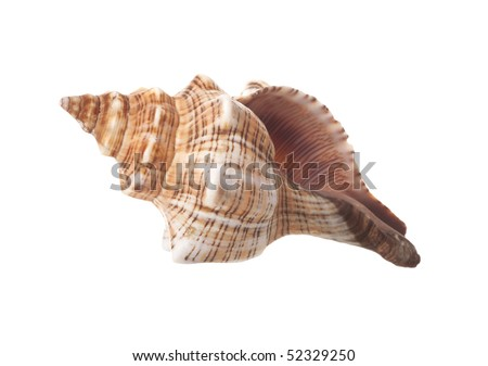 Spiral Sea Shell Isolated on White Background - stock photo