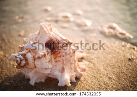 Spiral seashell on the sandy beach with sun reflection on the water - stock photo