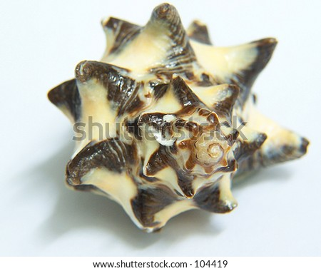 Spiral shell - stock photo