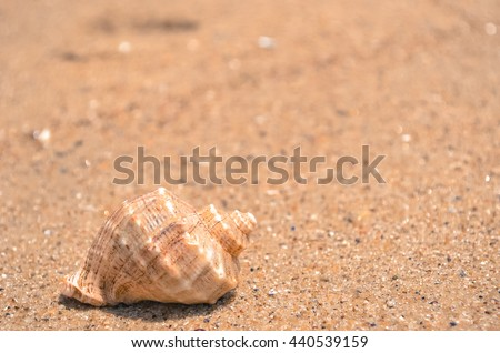 Spiral shell on paradise beach - stock photo