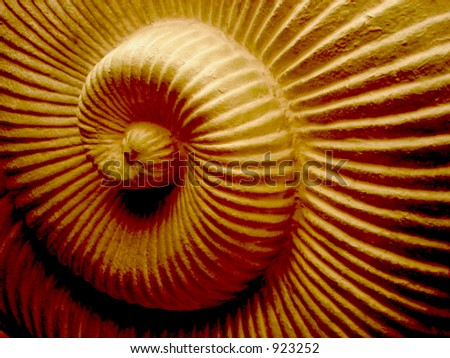 Spiral Shell Texture in Neutral - stock photo