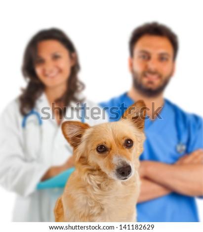 Spitz dog with veterinarians on white background - stock photo