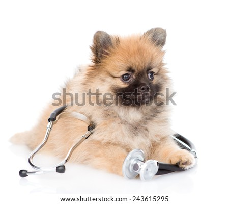 Spitz puppy lying with a stethoscope on his neck. isolated on white background - stock photo