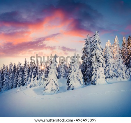 Splendid Christmas scene in the mountain forest. Colorful winter sunrise in the Carpathians, Ukraine, Europe. Artistic style post processed photo.