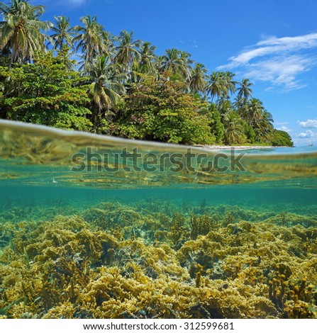 Split image above and below water surface on the shore of a lush tropical island with a coral reef underwater, Caribbean sea, Central America - stock photo