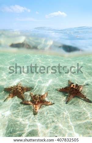 Split image of tree starfishes underwater, sunny day, blue sky - stock photo