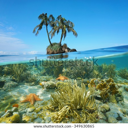 Split image over and under sea surface near an islet with two coconut palm trees above waterline and corals with starfish underwater, Caribbean, Panama - stock photo