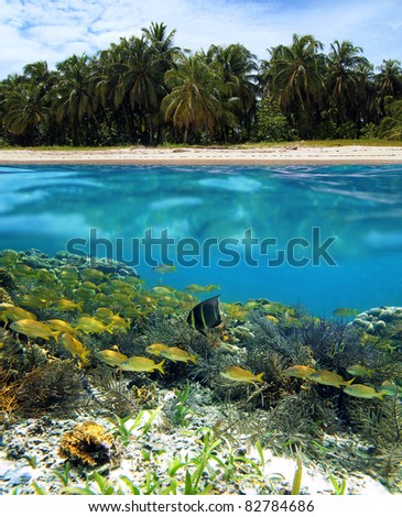 Split view of a tropical beach with coconut palm trees and under water surface a shoal of fish in a coral reef, Caribbean sea, Panama - stock photo