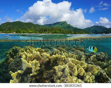 Split view over and under water surface in the lagoon with the coast of Huahine island above waterline and corals underwater, Pacific ocean, French Polynesia - stock photo