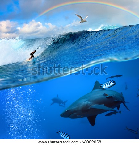 Splitted two parts image extreme story about the ocean and the surfer that sliding a surfing board on wave  and angry hungry bull-shark swimming underwater underneath him - stock photo