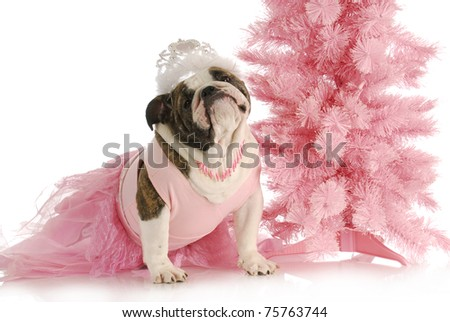 spoiled dog - english bulldog dressed like a princess in pink with tiara on white background - stock photo