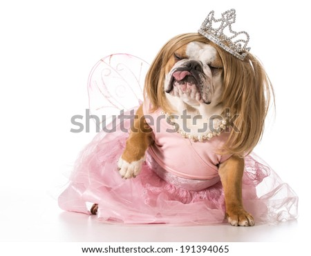 spoiled dog - english bulldog wearing princess costume - stock photo