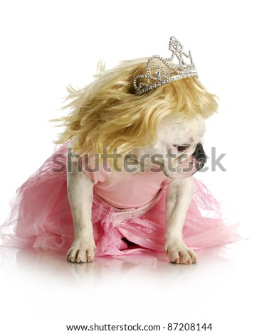 spoiled dog pouting - english bulldog dressed up with blond wig and pink tutu with sad expression - stock photo