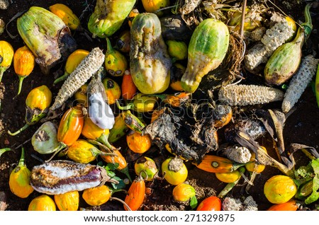 Food Waste Stock Photos Images Amp Pictures Shutterstock