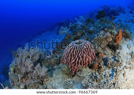 Sponge in the tropical coral reef