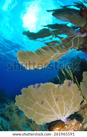 Sponges and fish on a Cayman reef, Grand Cayman - stock photo