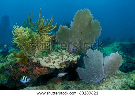 Sponges, Sea Fans and Sea Rods make up a coral composition. Picture taken in Broward County Florida. - stock photo