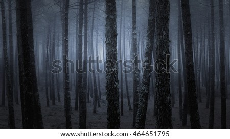 Spooky and dark foggy forest at night