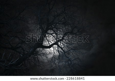 Spooky bare tree in moonlight - stock photo