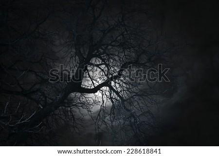 Spooky bare tree in moonlight - stock photo
